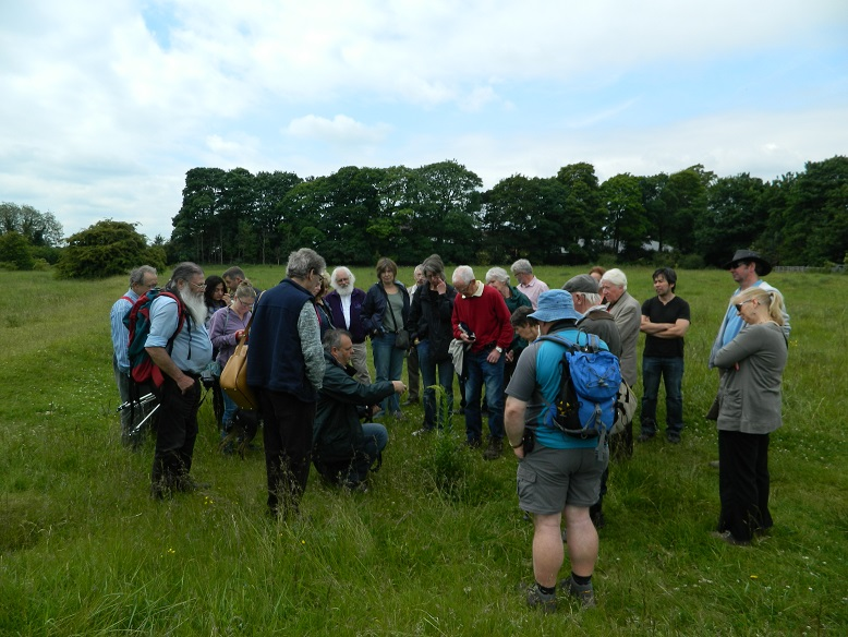 bradlaugh-fields-walk-in-the-meadows-14th-june-2015-007