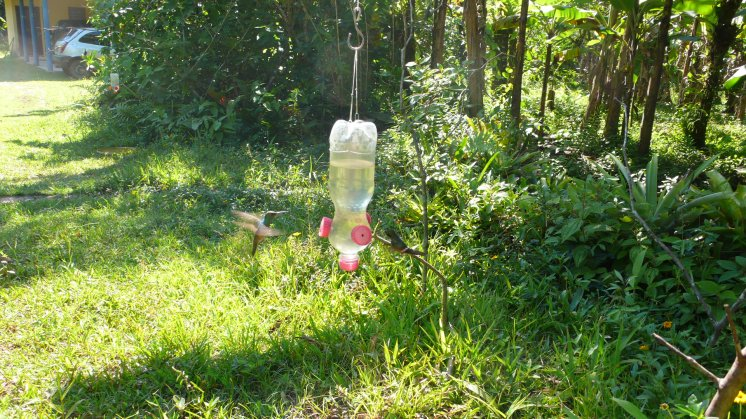 Hummingbirds on feeds in Brazil 2