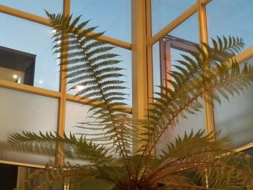 mk-tree-fern-20161204_162151