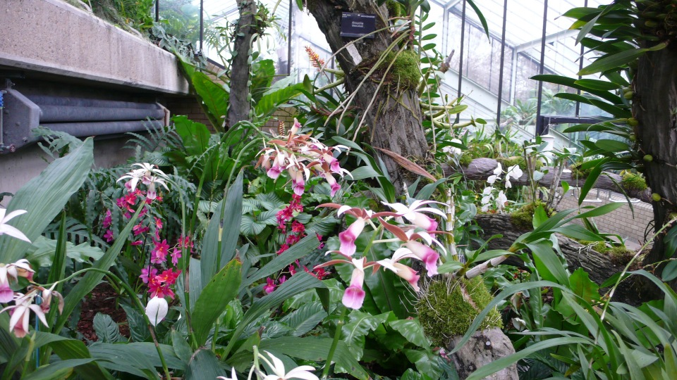 Orchids at Kew 2014-02-24 15.30.32
