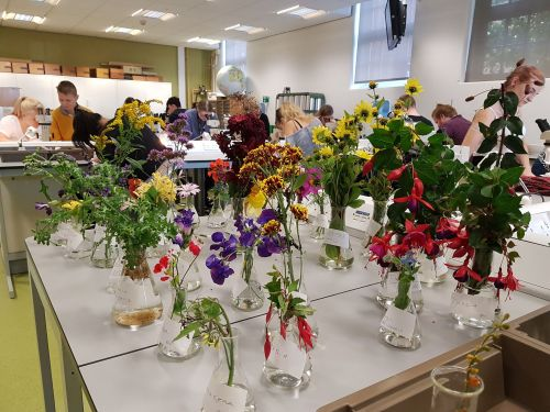 Students in the pollination practical 20171012_111355_preview