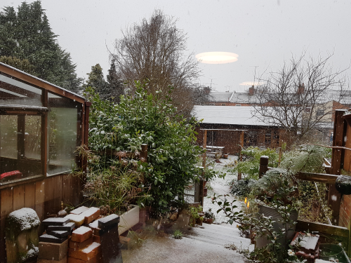 Snow in the garden 2018-01-21 11.20.48.png