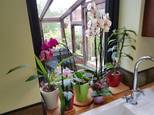 Orchids 20180512_112533.jpg