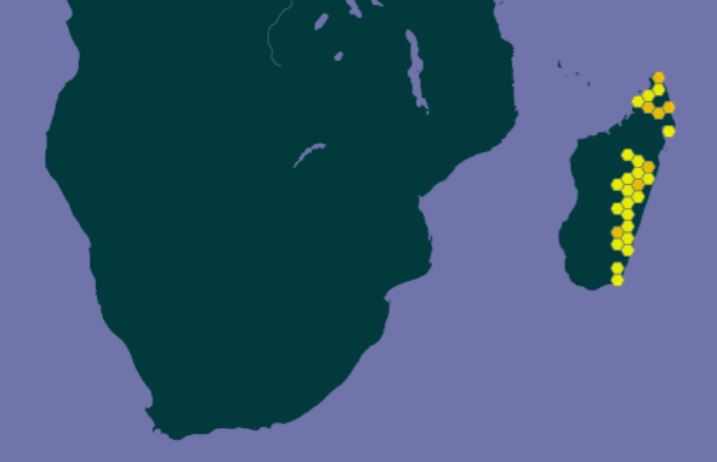 cynanchum obovatum from gbif