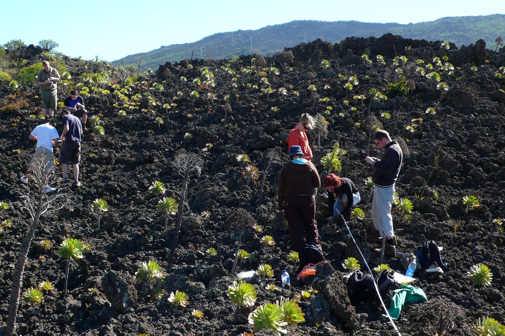 Figure 1 - Tenerife 2008 - students on the Aeonium field - lo res