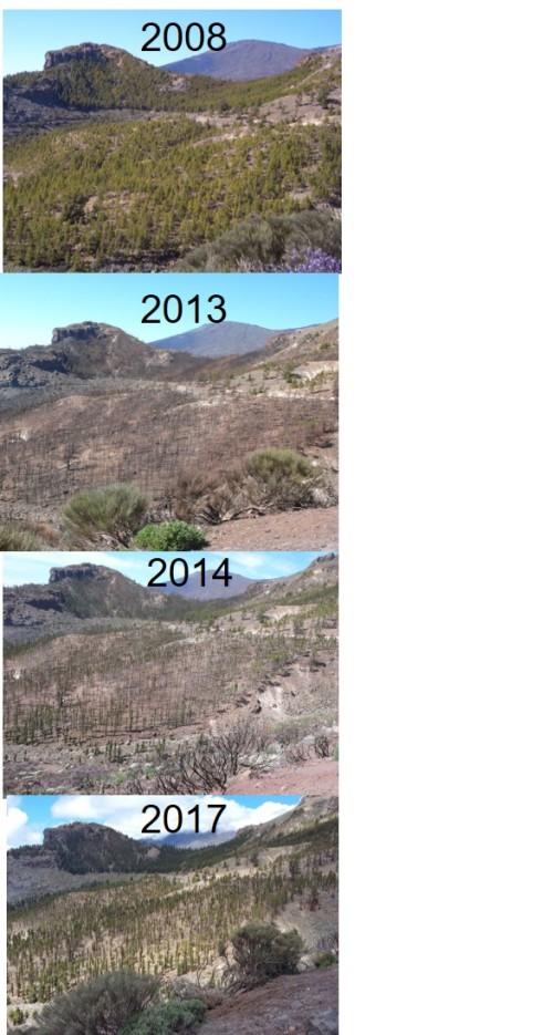 Figure 2 - Pine forest burn sequence.jpg